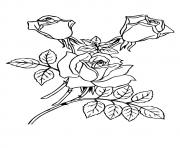 Printable three roses with leaves a4 coloring pages