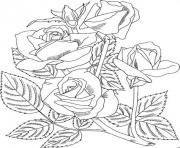 Printable Realistic Rose coloring pages