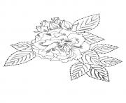 big flower a4 coloring pages