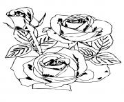 Printable rose flowers a4 coloring pages