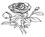 Printable rose nature a4 coloring pages