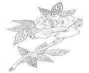Printable single rose with leaves a4 coloring pages