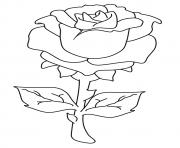 Printable the beautiful rose a4 coloring pages