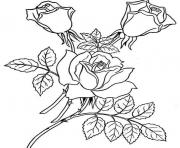 Printable Red Realistic Rose coloring pages