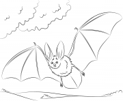 townsends big eared bat halloweens coloring pages