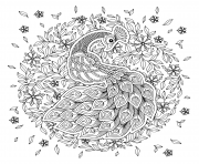 Printable peacock adult antistress black and white coloring pages