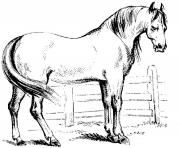 Printable Colt in Pasture coloring pages