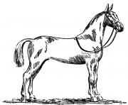 Printable Standardbred horse coloring pages
