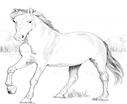Printable horse spanish mustang coloring pages