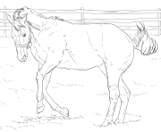 Printable bucking horse coloring pages