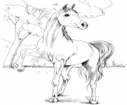 Printable horse egyptian arabian coloring pages