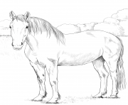Printable horse irish draught coloring pages