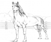 Printable horse morgan coloring pages
