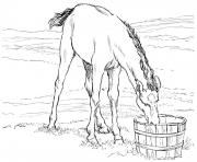 Printable horse colt drinks water coloring pages
