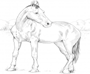 Printable horse marwari mare coloring pages