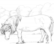 Printable horse shetland pony coloring pages