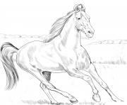 Printable horse marwari coloring pages