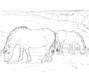 Printable horse ponies coloring pages