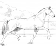 Printable horse oldenburg coloring pages