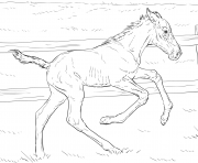 Printable horse bucking foal coloring pages