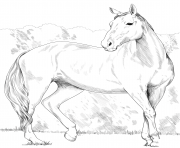 Printable horse heavy warmblood mare coloring pages