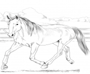 Printable horse dutch warmblood coloring pages