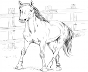 Printable horse kiger mustang coloring pages