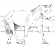 Printable australian stock horse coloring pages