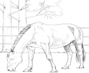 Printable horse danish warmblood coloring pages