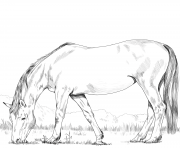 Printable hanoverian horse coloring pages