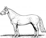 Printable horse stallion coloring pages