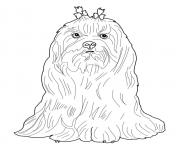 Printable maltese dog coloring pages