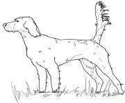 Printable english setter dog coloring pages