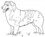 Printable australian shepherd dog coloring pages