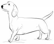 Printable dachshund coloring pages