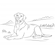 Printable labrador retriever cute dog coloring pages