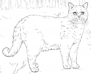 british shorthair cat coloring pages