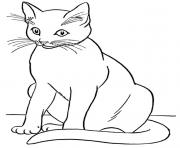 realistic cat cute coloring pages