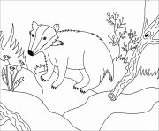 badger animal simple