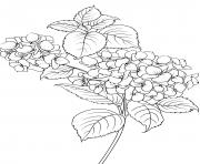 elegant flowers and leaves coloring pages