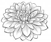 adult dahlia flower coloring pages