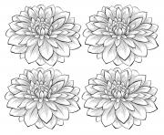adult four dahlia flowers coloring pages