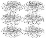 adult six dahlia flower coloring pages