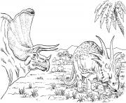 Two Triceratops in search of food