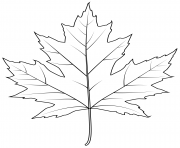 Printable silver maple leaf coloring pages