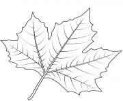 Printable london plane tree leaf coloring pages