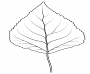 Printable quaking aspen leaf coloring pages